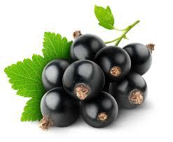 sadzonki porzeczki czarnej, sadzonki truskawek szkółka
